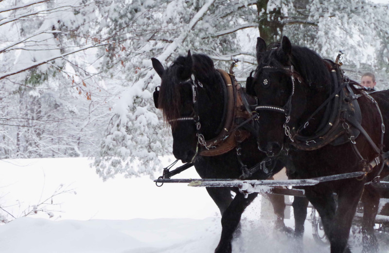 Horse drawn sleigh rides in winter at The Mountain Top Inn & Resort.