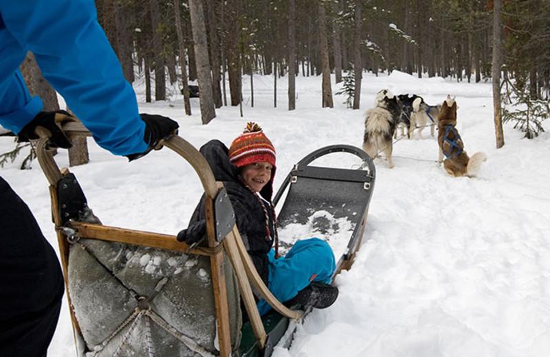 Dog sledding at Breckenridge Discount Lodging.