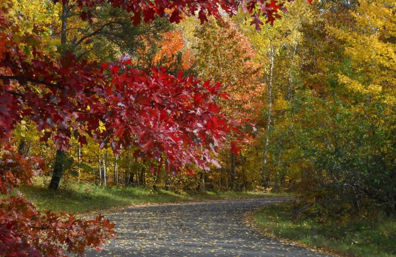 Path at Wilderness Resort Villas.