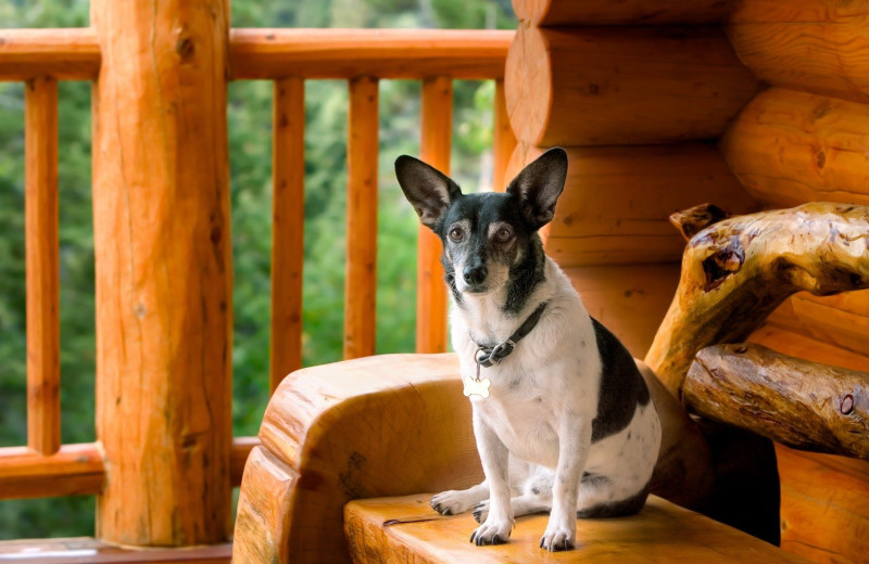 Pets welcome at Aunt Bug's Cabin Rentals, LLC.