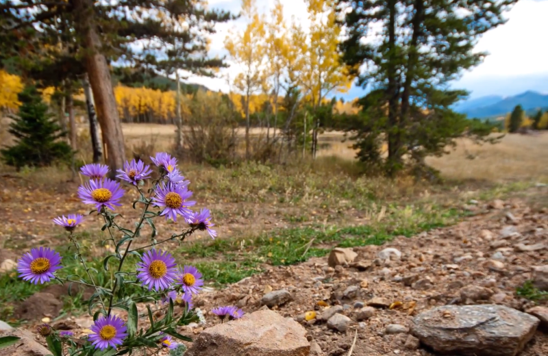 Wind River Ranch is surrounded by beautiful scenery