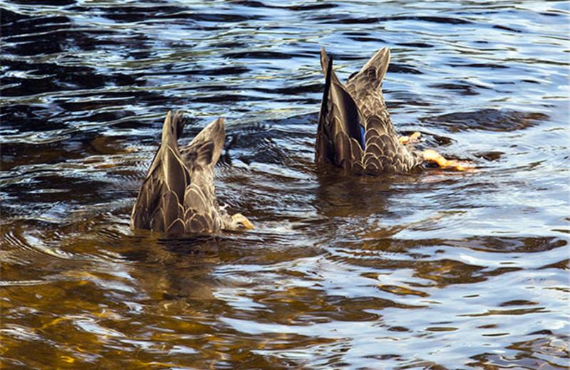 Wildlife watching at Killarney Lodge.