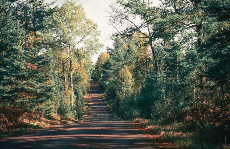 Forest near Pelican Beach Resort.