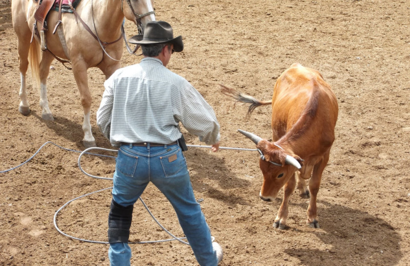 Rodeo at  Sylvan Dale Guest Ranch.