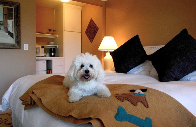 Pet friendly rooms at The Tides Inn.