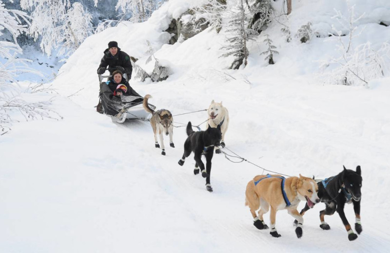 Dog sled rides at Four Seasons Resort Whistler.