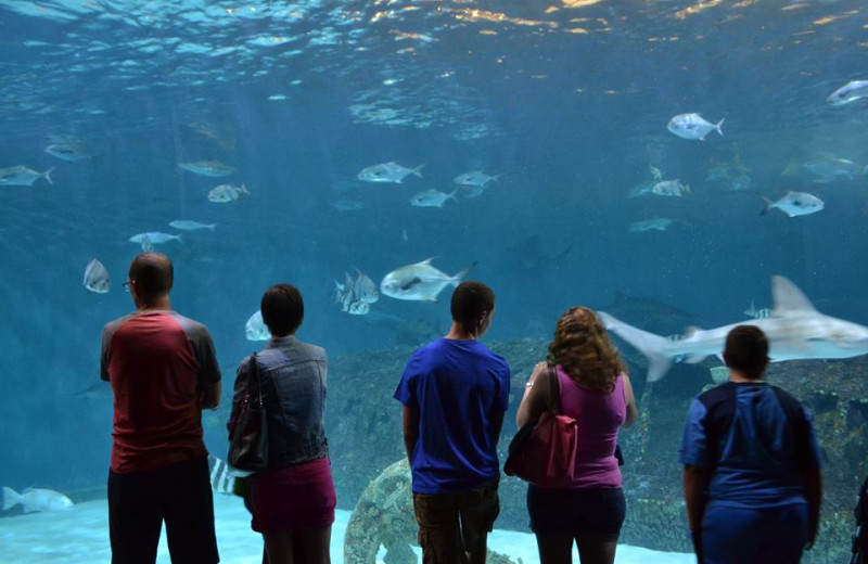 Free admission to the NC Aquarium with Atlantic Realty's Fun N Sun Program