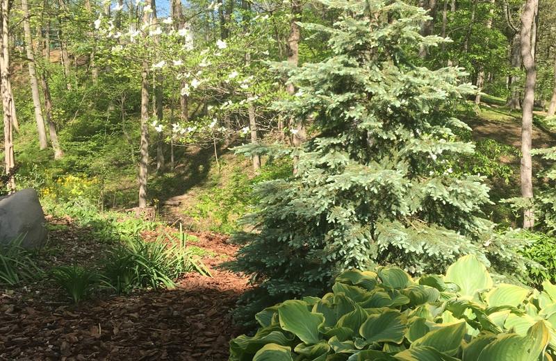 Garden at Chateau Lake Logan.