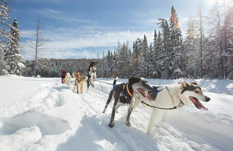Dog sled at Wolf Den Hostel and Nature Retreat.