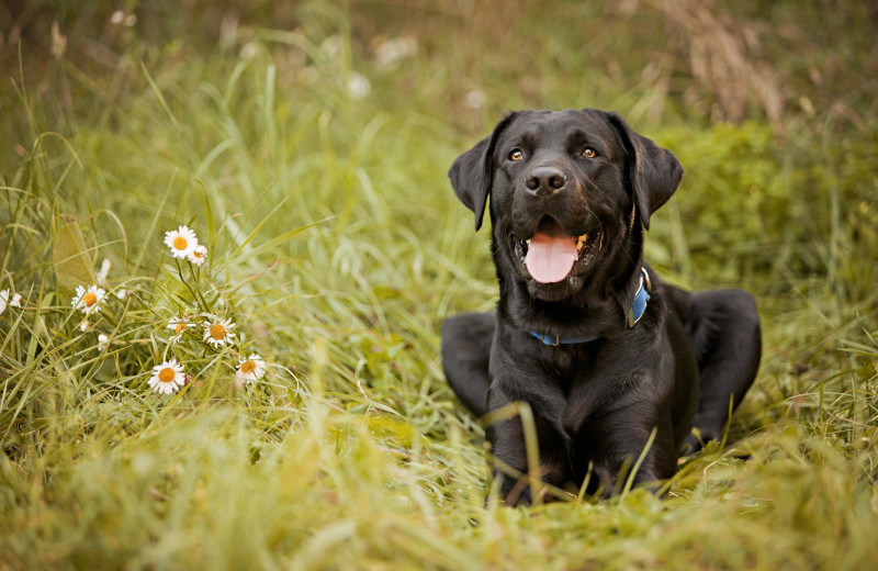 Pets welcome at Amazing Branson Cabin Rentals - RentBranson.
