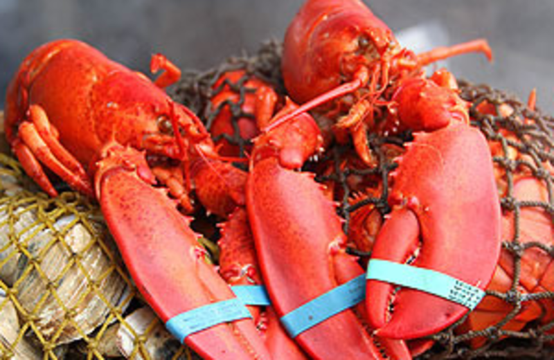 Fresh Lobster at Bar Harbor Regency