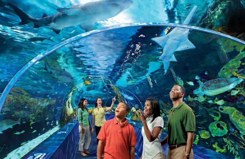 Aquarium near Eden Crest Vacation Rentals, Inc.