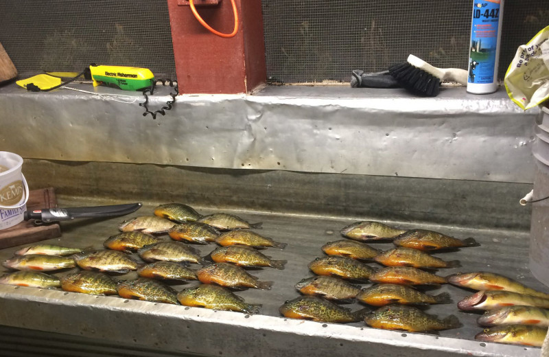 Fish cleaning at Driftwood Resort.