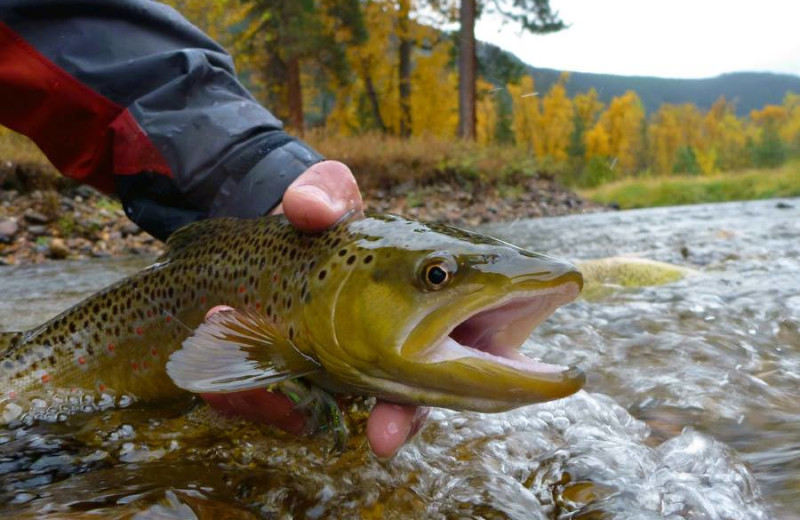 Trout fishing at Clark Fork River Lodge.