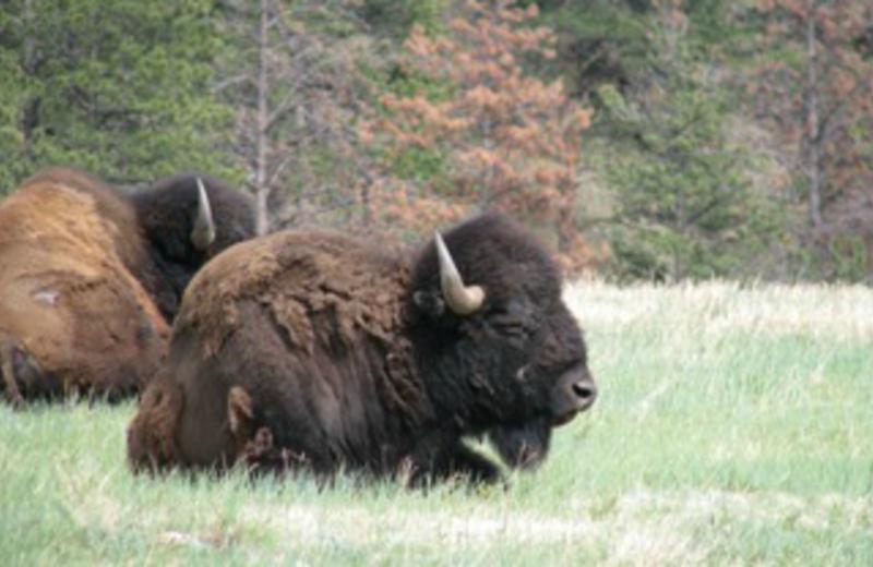 Wild Life at Kelly Inn West Yellowstone Hotel