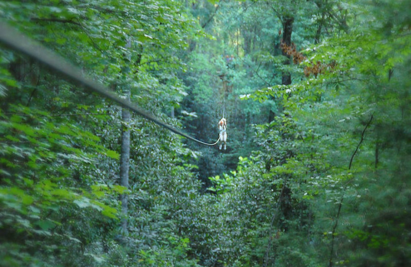 The Nantahala Gorge zip lines near Watershed Cabins.