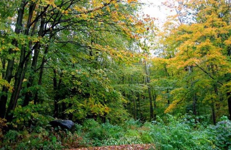 Forrest at Birch Ridge Inn.