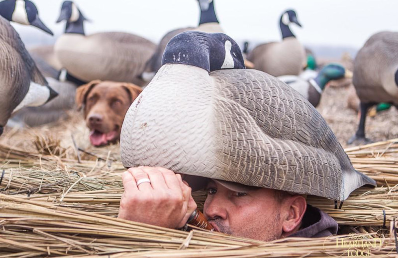 Goose hunting at Harpole's Heartland Lodge.