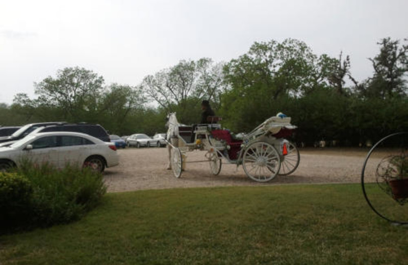 Carriage Rides at Haven River Inn