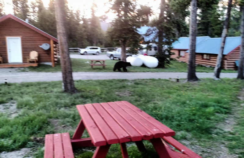 Picnic at Big Moose Resort.