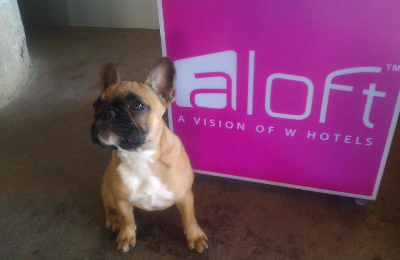 Pets welcome at Aloft Dallas Downtown.