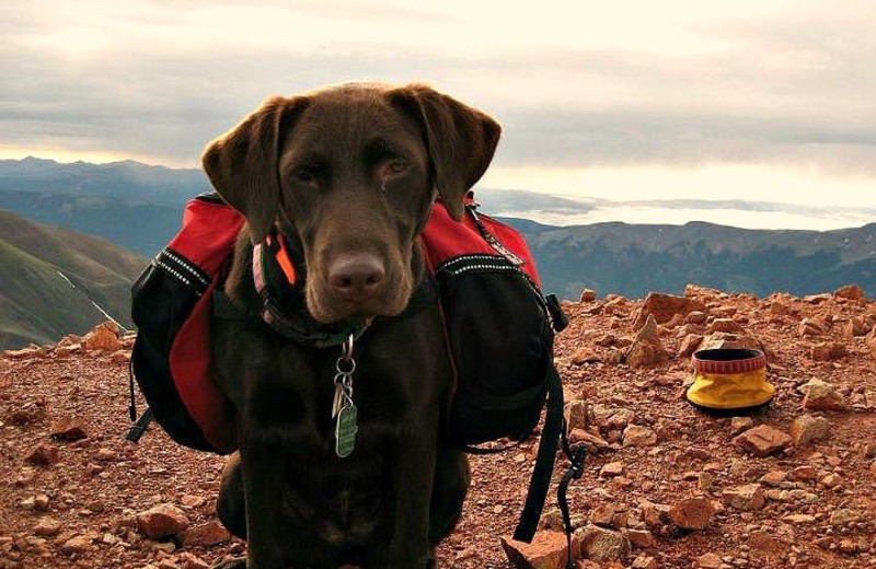 Pet-friendly Accommodations at Yellowstone Under Canvas