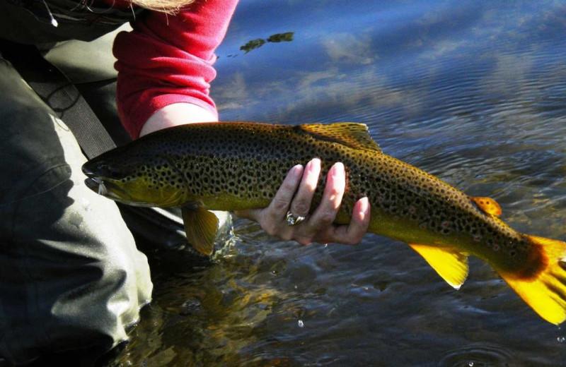 Fishing near Hilton Garden Inn Missoula.