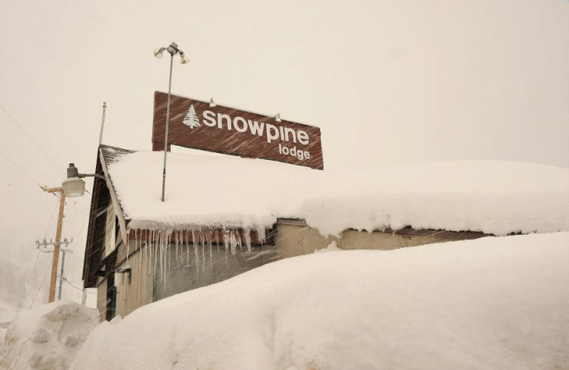 Winter time at Snowpine Lodge.