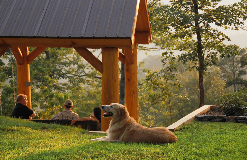 Pets welcome at Watershed Resort.