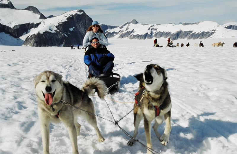 Dog sledding at Pearson's Pond Luxury Inn and Adventure Spa.