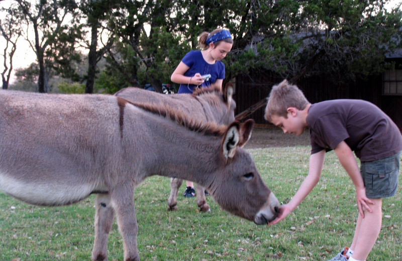 Kids feeding donkey at Silver Spur Guest Ranch.