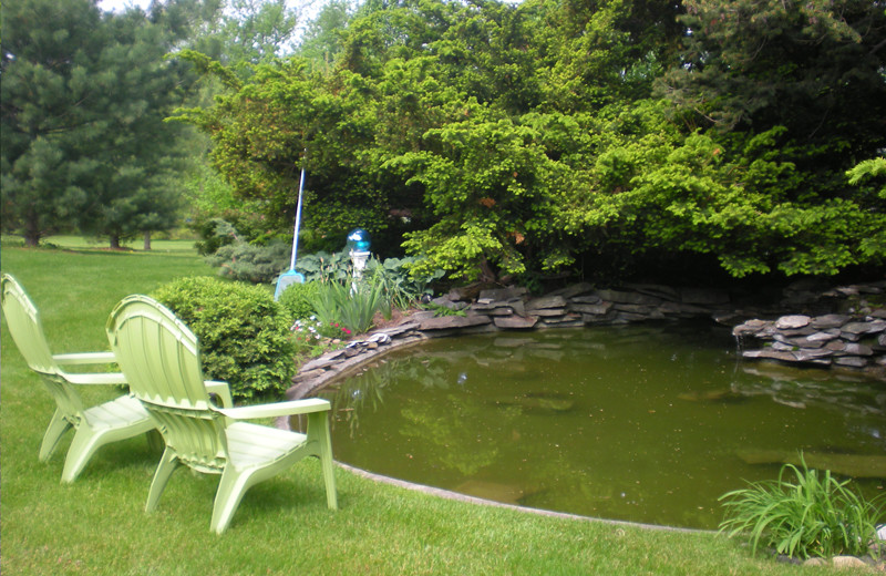 The Tranquility Pond at The Fox and The Grapes Bed and Breakfast is a wonderful place to watch the frogs and dragonflies.