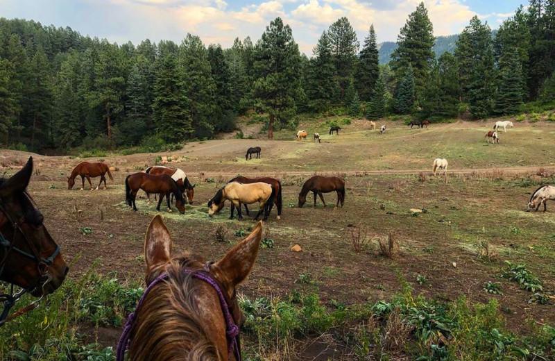 Horses at Colorado Trails Ranch.