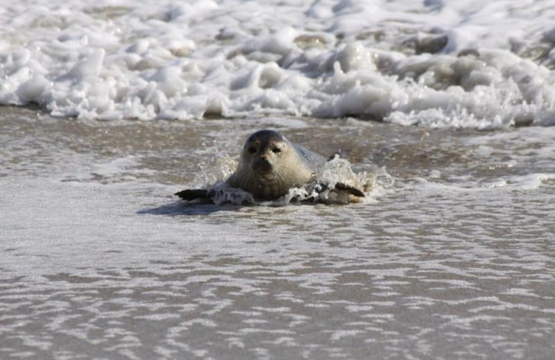 Seal at Hatteras Realty