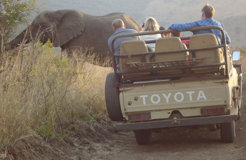 Elephant safari at Mkuze Falls Game Lodge.