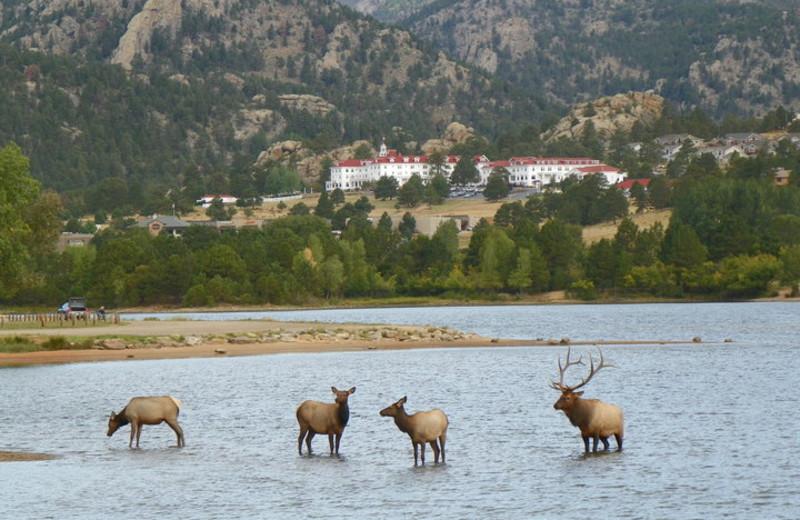Wildlife near The Stanley Hotel