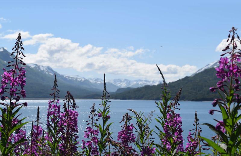Scenic view at Zachar Bay Lodge.