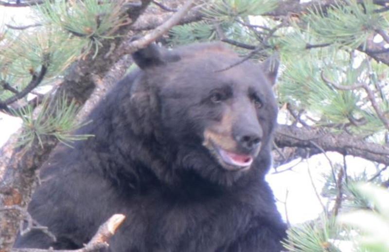 Big Bear at Brynwood on the River