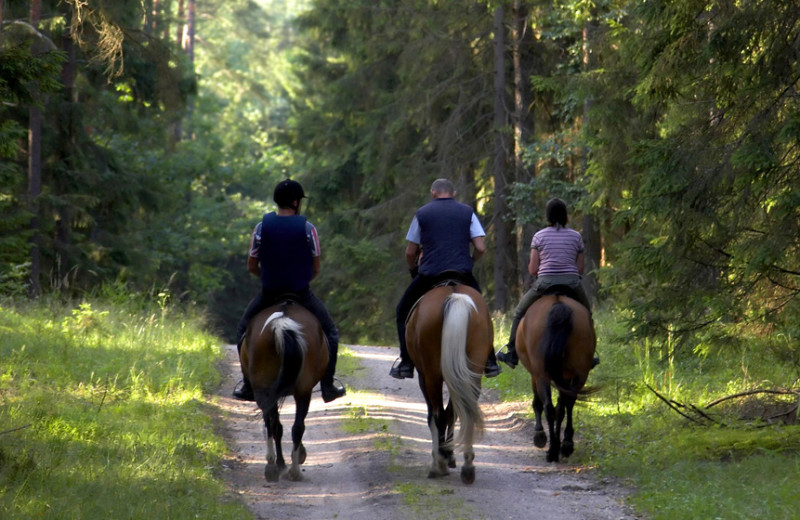Horseback riding at Inn At Lake Joseph.
