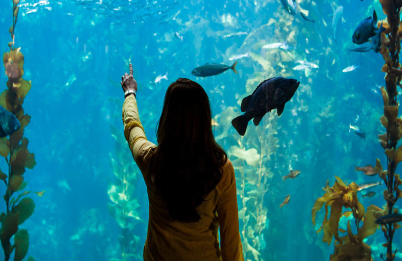 Explore the world-renowned Monterey Bay Aquarium!