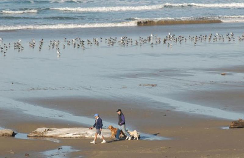 Pet friendly beaches at Manzanita Rental Company.