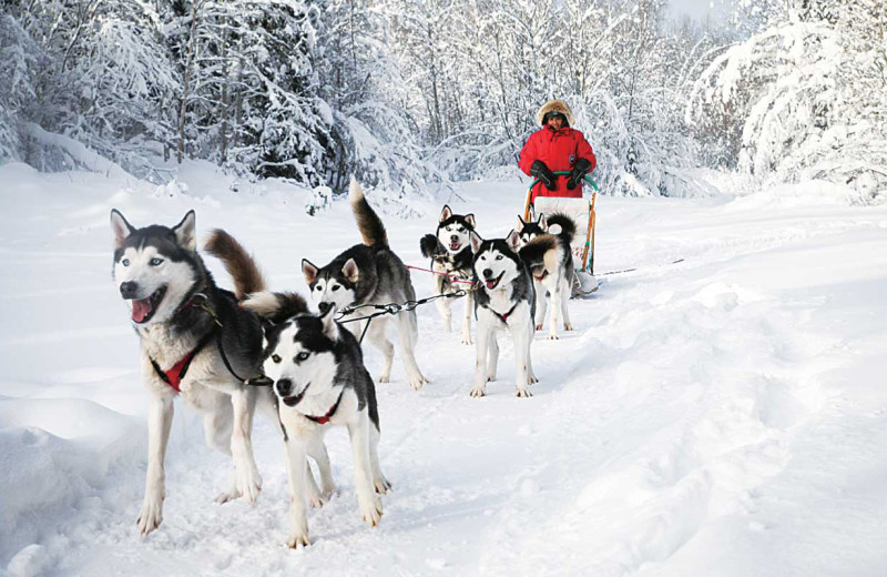 Dog sled at Sandy Lane Resort.