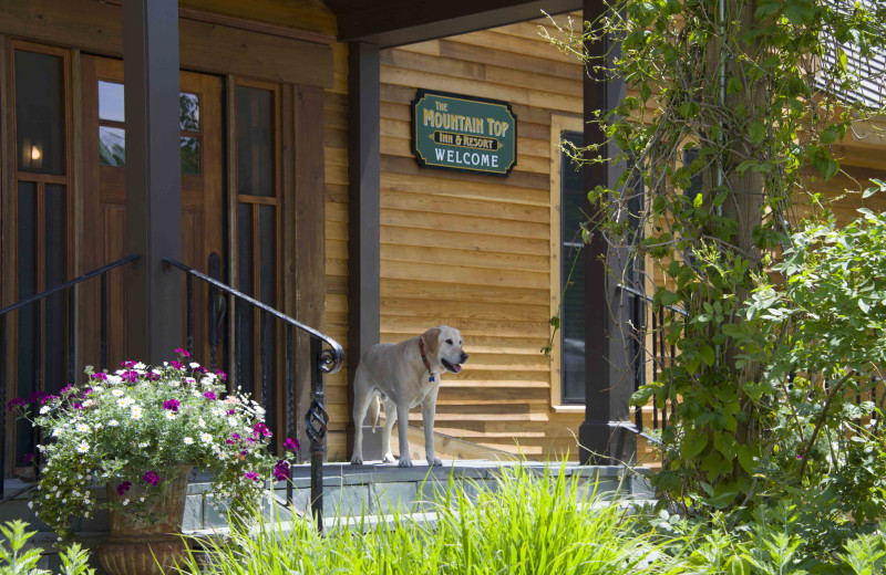 Pets welcome at The Mountain Top Inn & Resort.