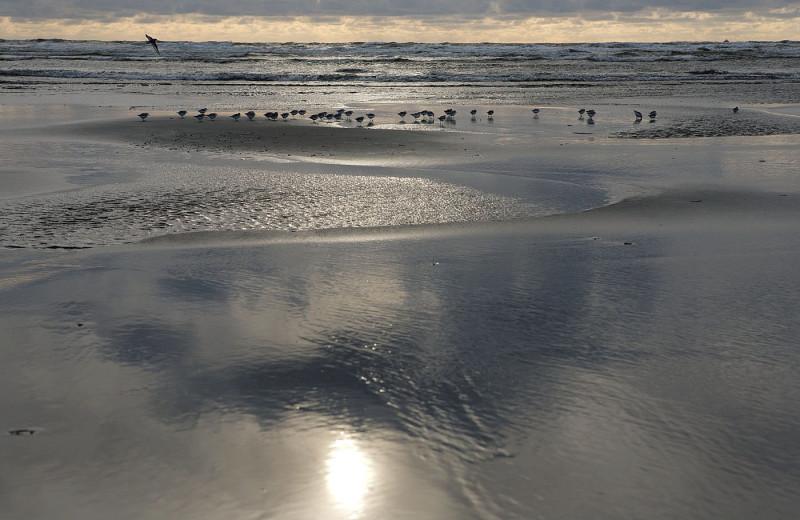 The beach at Beachwood Resort Condos.