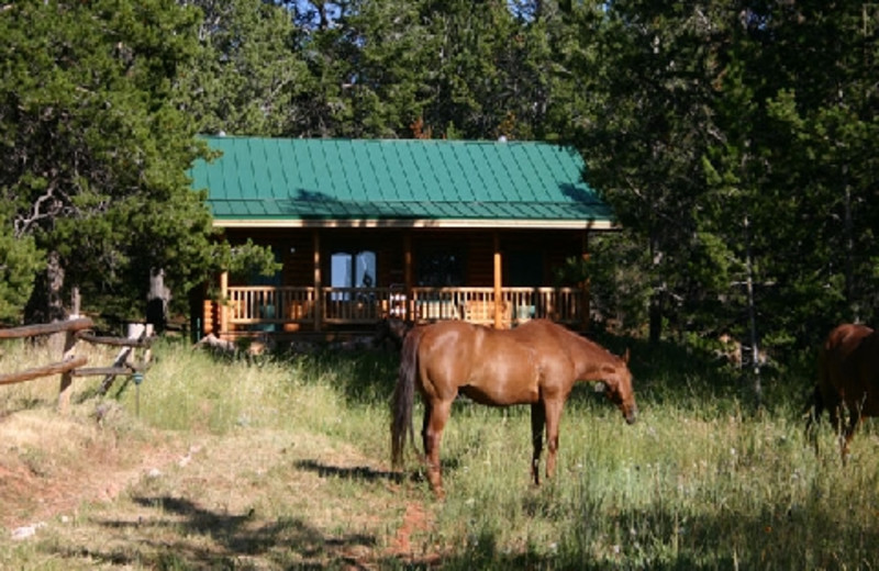 Horse grazing near cabin at The Hideout Lodge & Guest Ranch.
