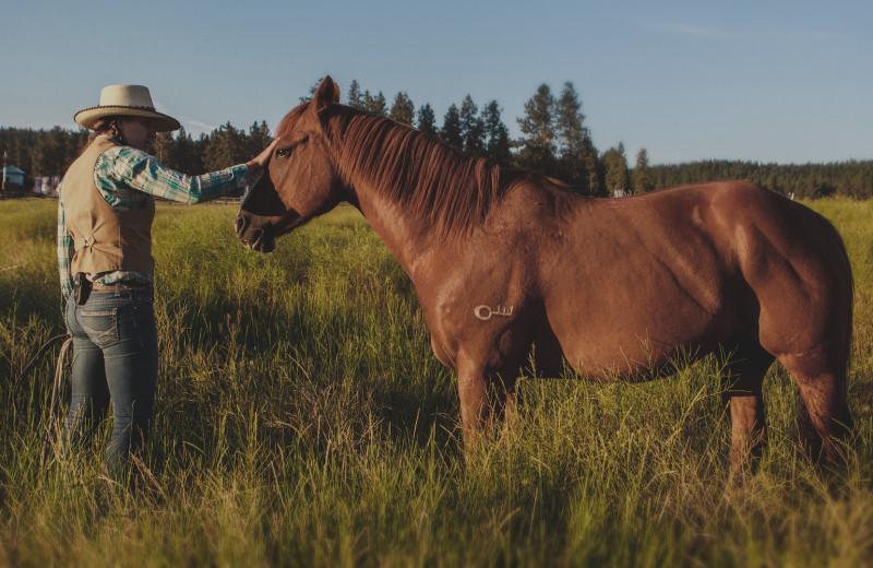 Horse at The Green O.