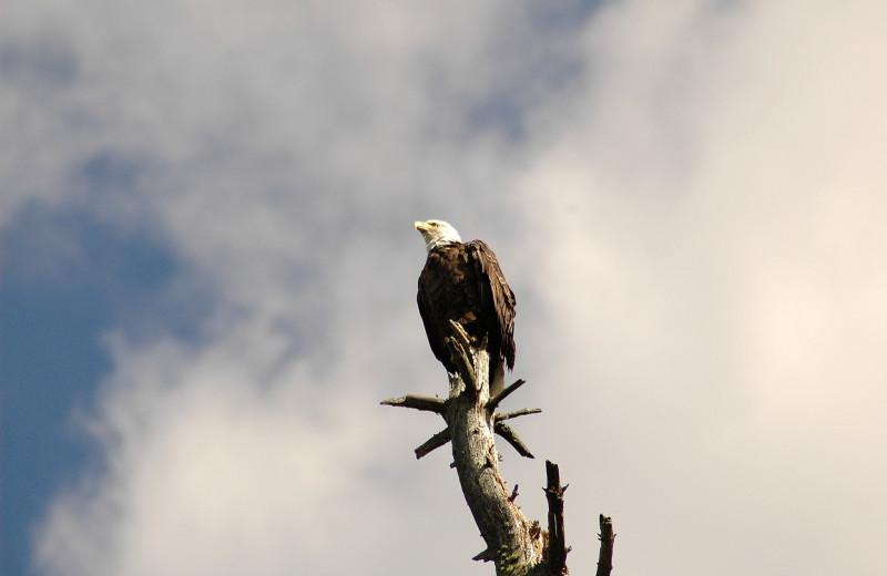Eagle at Northwoods Vacation Rentals.