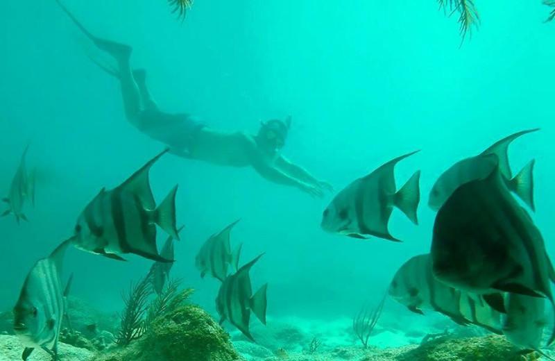 Diving at Rock Reef Resort.