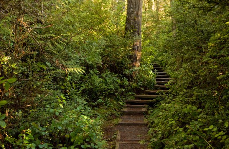 Woods at Quileute Oceanside Resort.