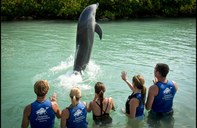 Swim with dolphins at Hawks Cay Resort.